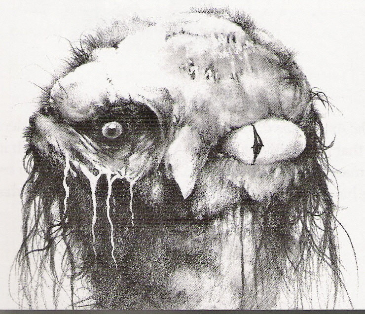 "The 15 Most Disturbing Illustrations From ""Scary Stories"